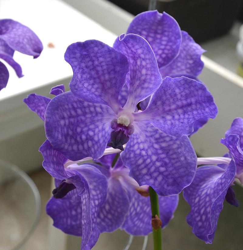 orchideen hobby. Black Bedroom Furniture Sets. Home Design Ideas